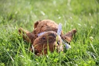 [Imagen: oso-de-peluche-en-el-jardin.jpg]
