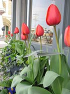 Home Maintenance Tips for Spring.