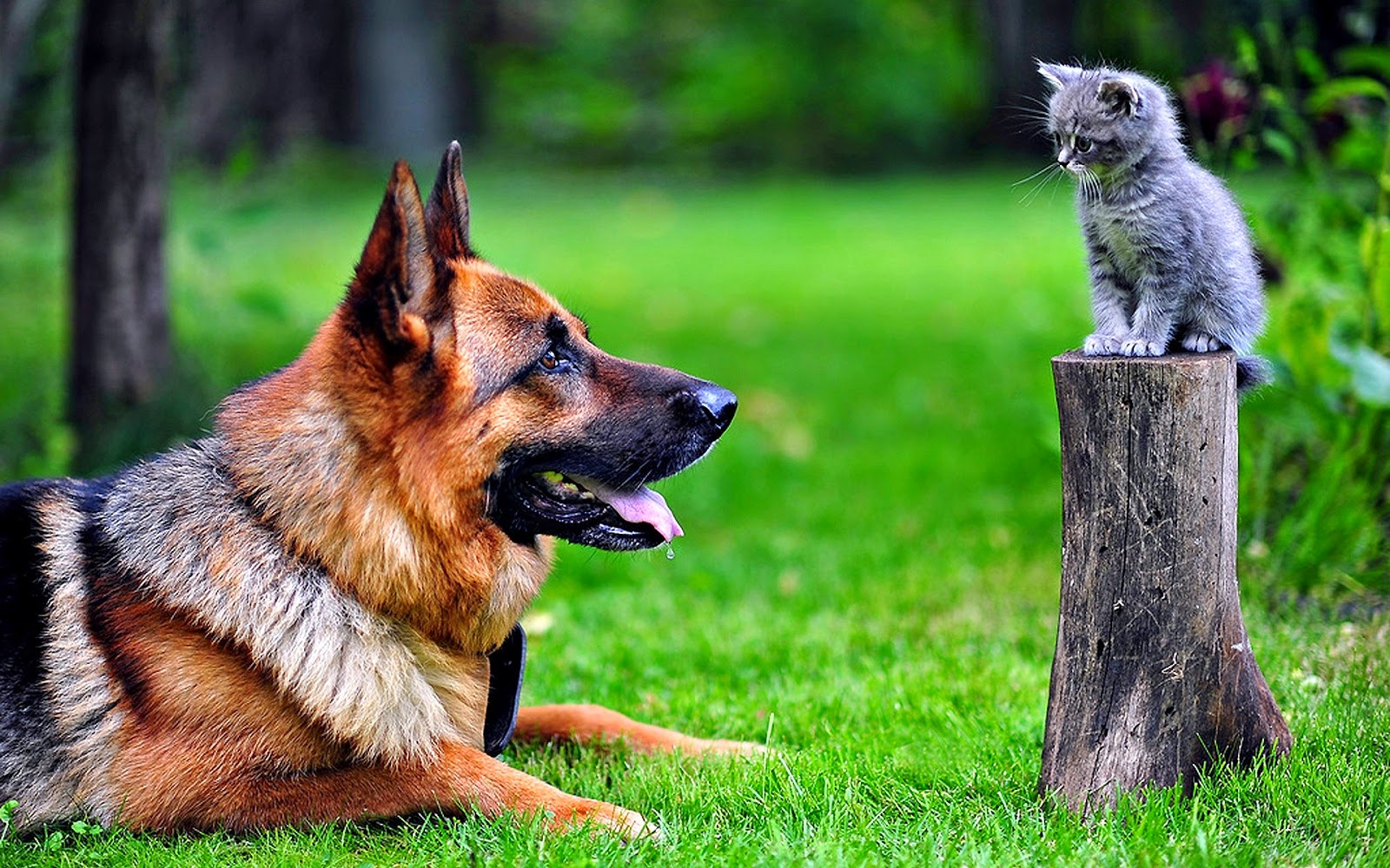 Dog And Cat Wallpapers Hd Wallpapers High Quality Wallpapers