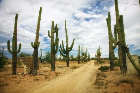 Adaptasi Kaktus