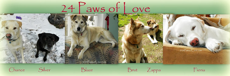 24 PAWS OF LOVE