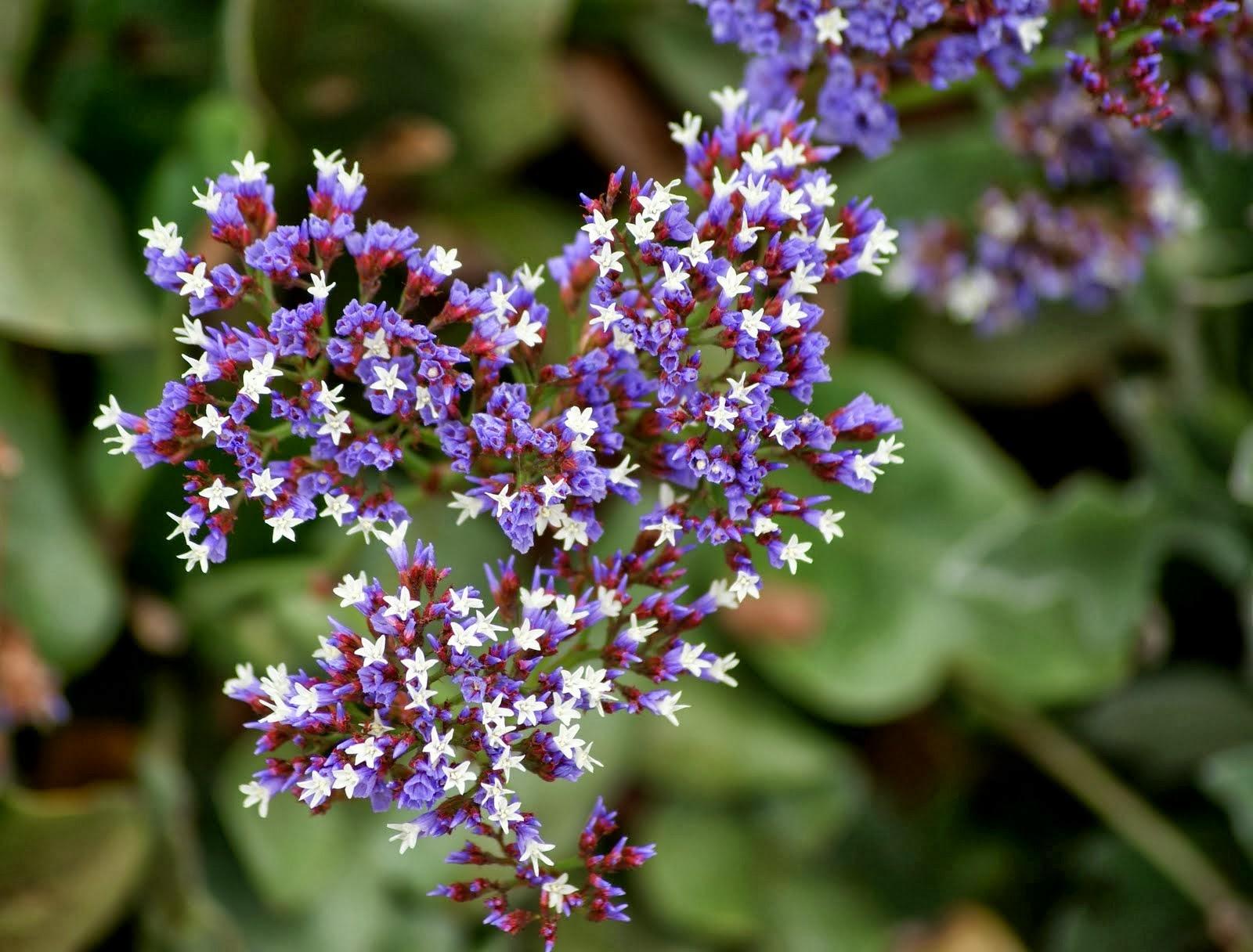 Flower Homes Caspia Flowers