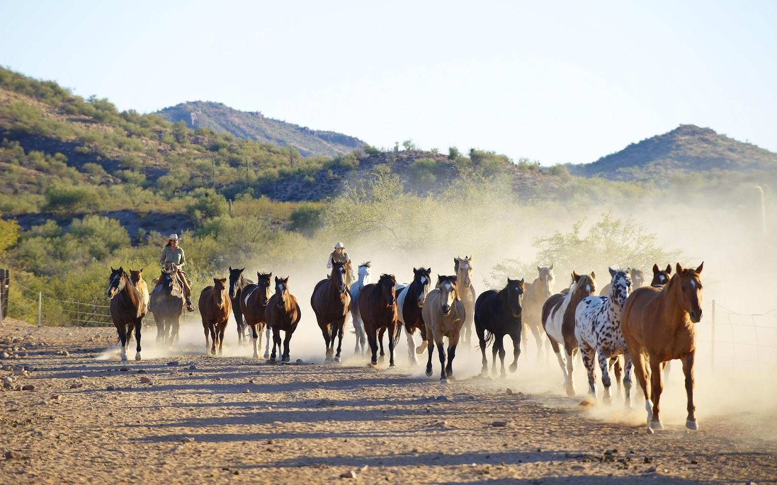 HD paarden achtergronden en fotou0026#39;s : Bureaublad Achtergronden