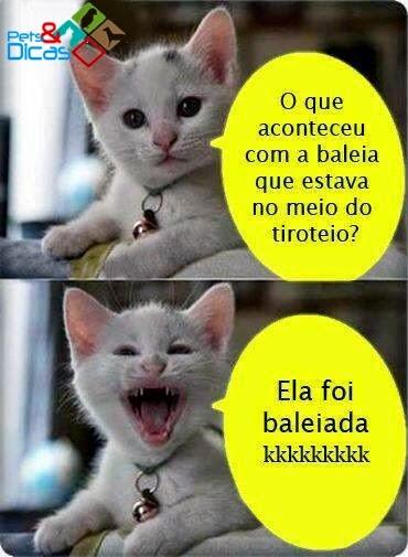 Montagens de piadas de gato para Facebook