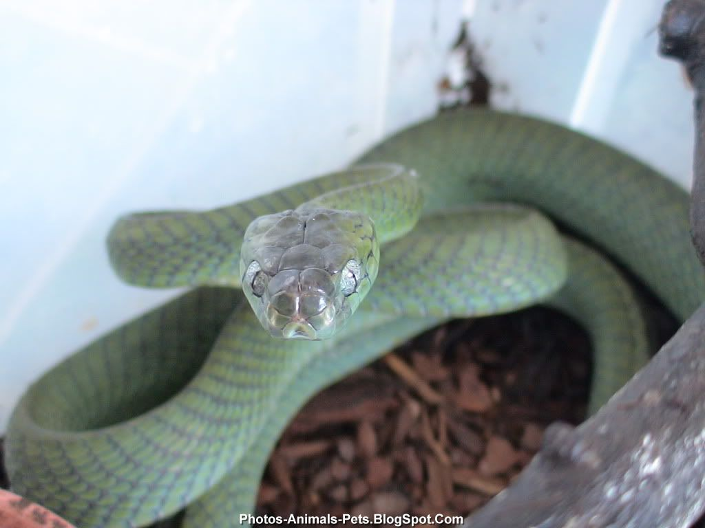http://3.bp.blogspot.com/-y1-6HSE73qo/TiMFJZZowjI/AAAAAAAABwo/lHzAlDxJYEQ/s1600/snakes%2Bpet_0001.jpg