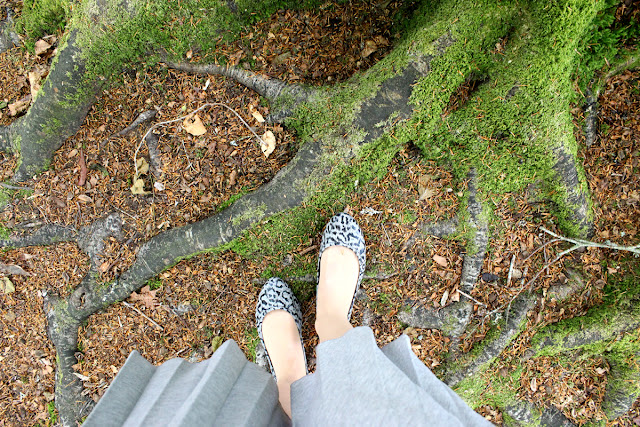 leopard-ballerinas, todaymyway.com, forest-in-bloom, travel