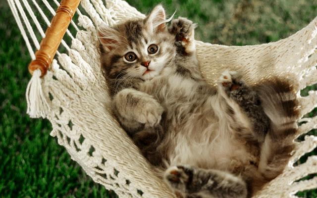 Hình nền mèo dễ thương nhất
