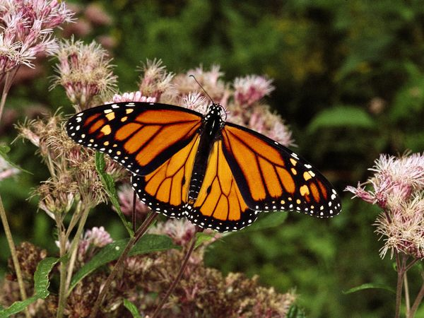 """El Programa """"mariposa monarca"""": las claves de la generación de esclavos zombies / Actor Robert Downey Jr: ¿próxima víctima MK Ultra?"""