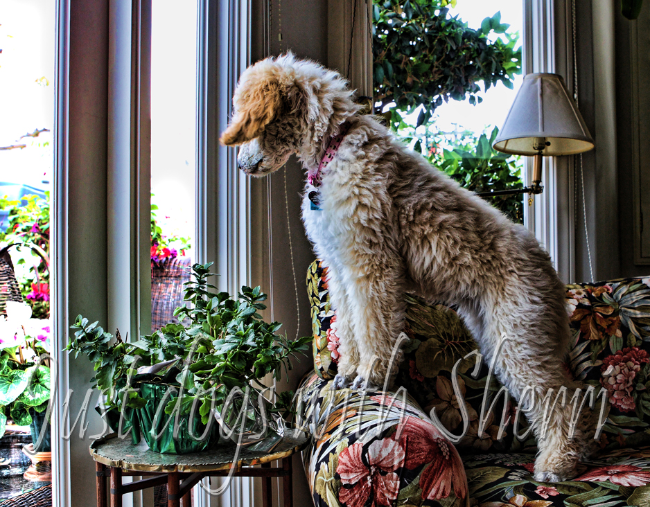 Dog friendly making your home dog friendly - Make house pet friendly ...