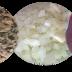 Receita sem adição de Sal | Para uma alimentação saudável