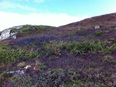 Biotiske faktorer i fjellet