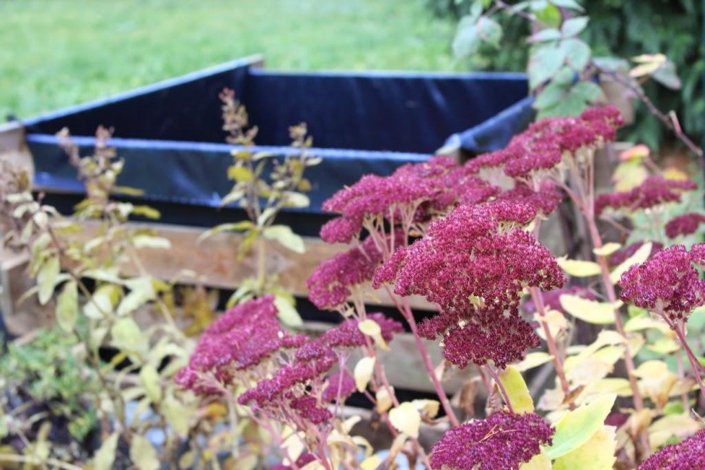 Steiniger Garten : Günstig gärtnern mit Hochbeeten