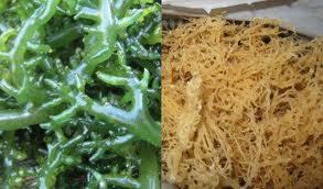 Tips mengatasi Jerawat  dengan rumput laut)