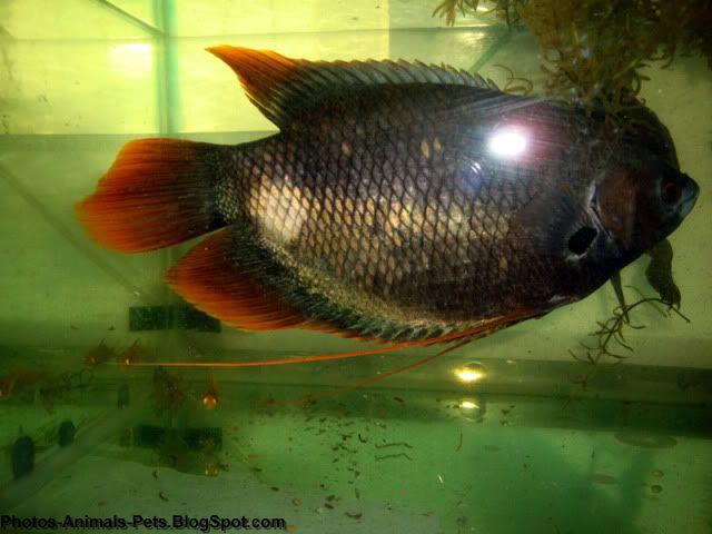 http://3.bp.blogspot.com/-y21Dw4Uc2dc/TZ2FBu_NBjI/AAAAAAAAAf8/FTmR8QPYL_w/s1600/Fish%2Bpictures%2B_0002.jpg