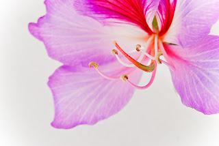 hermosa flor violeta y rosa