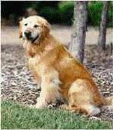 James Crane S Dog Daisy