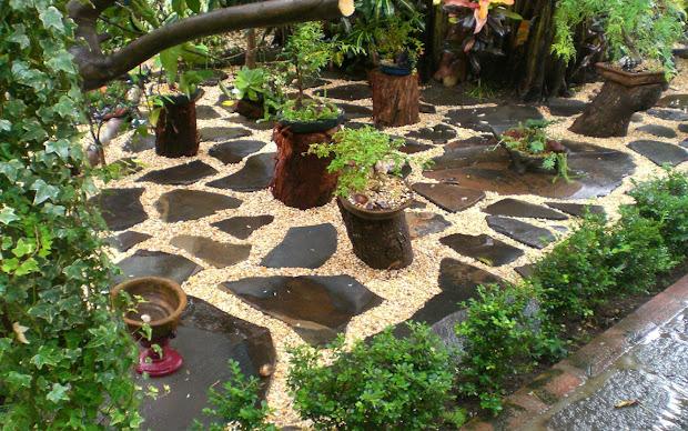 design & decor'buzz bonsai - raising