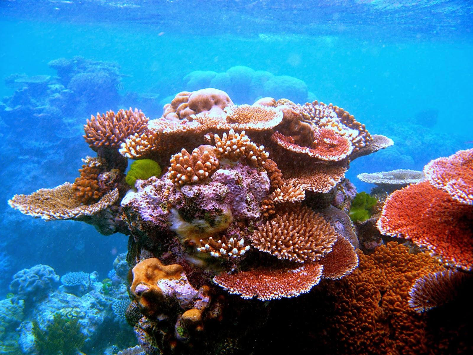 http://phys.org/news/2015-02-fish-pee-coastal-ecosystems-healthy.html
