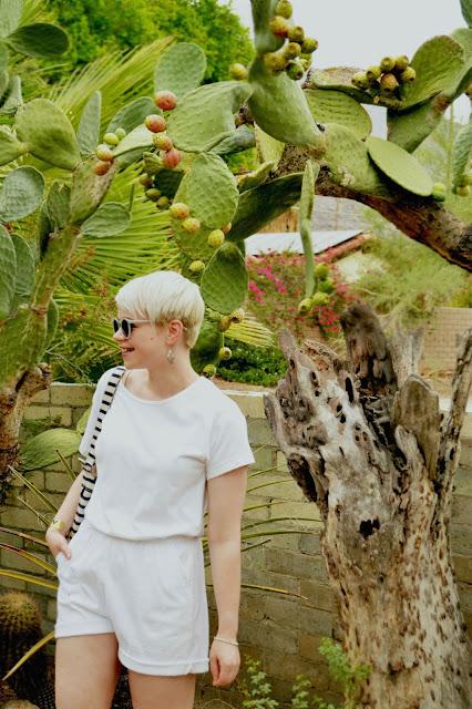 botany, cacti, cactus, fashion, desert life, plants, palm springs, moorten botanical garden