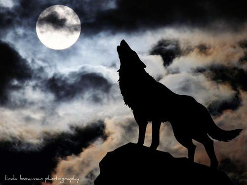 Lobo Huargo; la leyenda del lobo y la luna ✓ - Chismes Mundo ...
