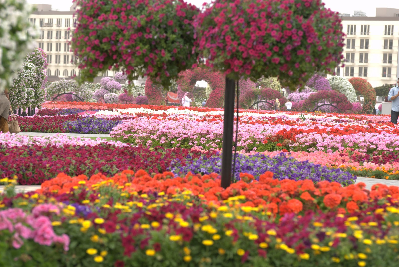 a day in miracle garden dubai vagish hardooru