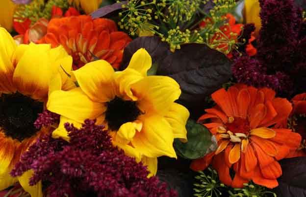 Agromin News: Fall Planting Season Begins in September