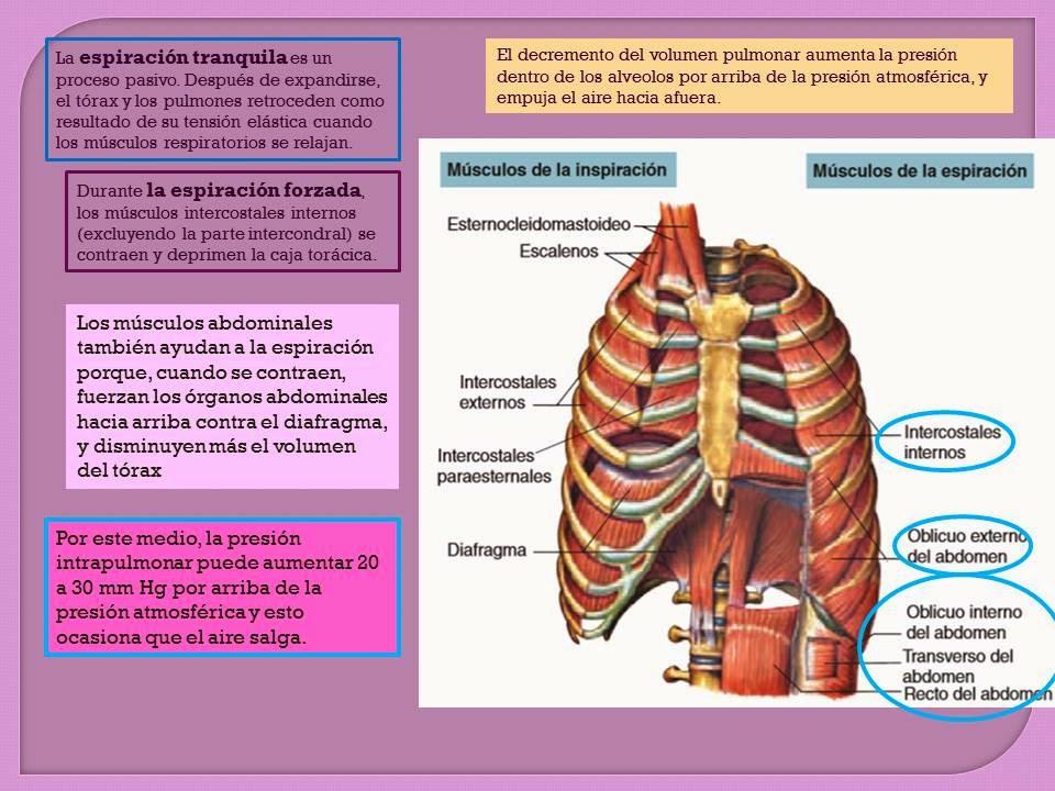 MECÁNICA DE LA RESPIRACIÓN-   Blog de Fisiología Médica