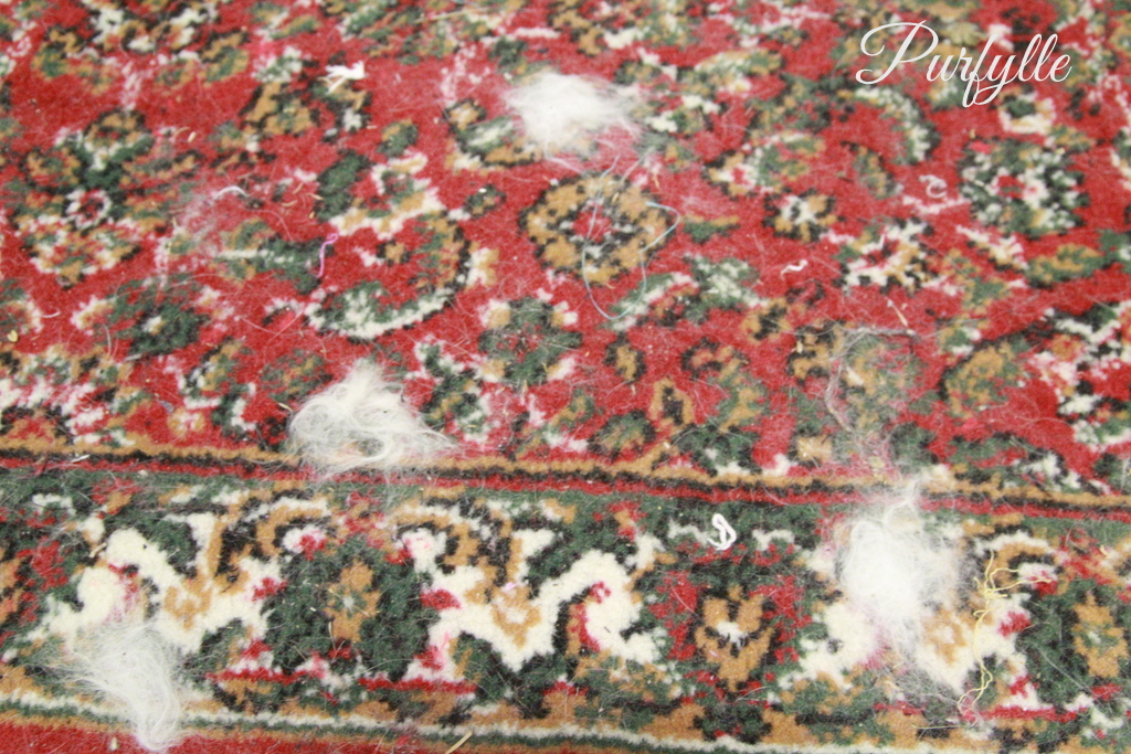 rug covered in cat fur