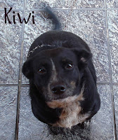 mia cugina Kiwi