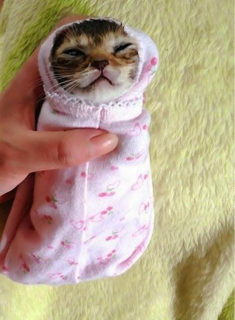 La historia de la gatita Wasabi-chan