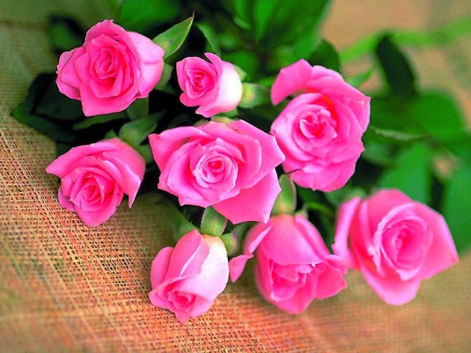 http://3.bp.blogspot.com/-y4P-TwV4rGg/U_Hi1RFKSlI/AAAAAAAAPQc/yJToER0MLtg/s960/flowers%2B(146).jpg