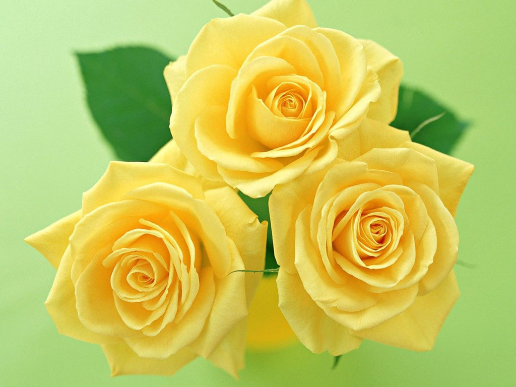 Stylish Yellow Flower Here Everythink Is Stylish