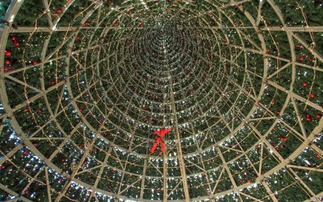 Рабочий внутри гигантской елки в Великобритании