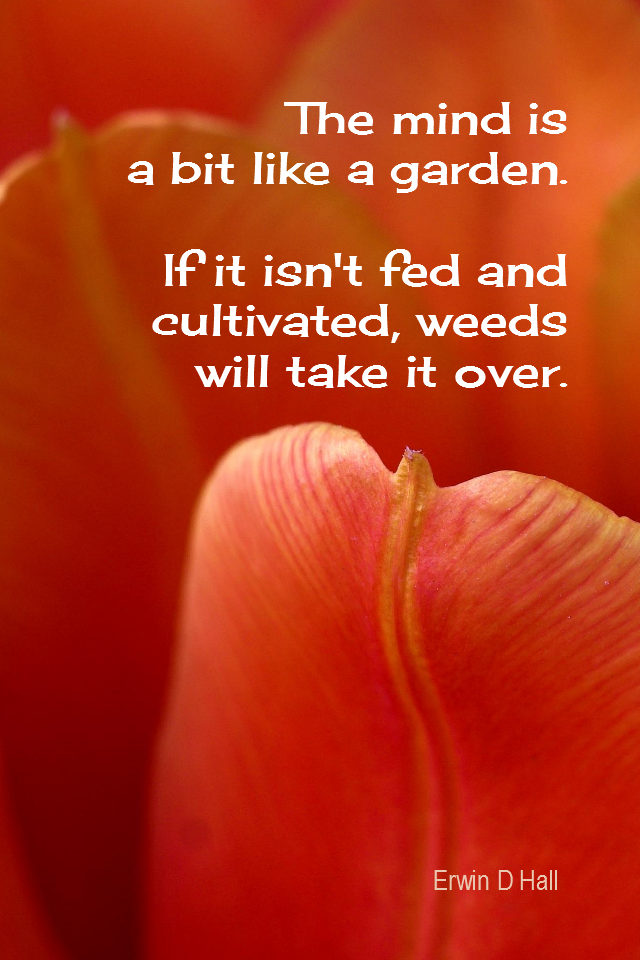 visual quote - image quotation for MIND - The mind is a bit like a garden. If it isn't fed and cultivated, weeds will take it over. - Erwin D Hall