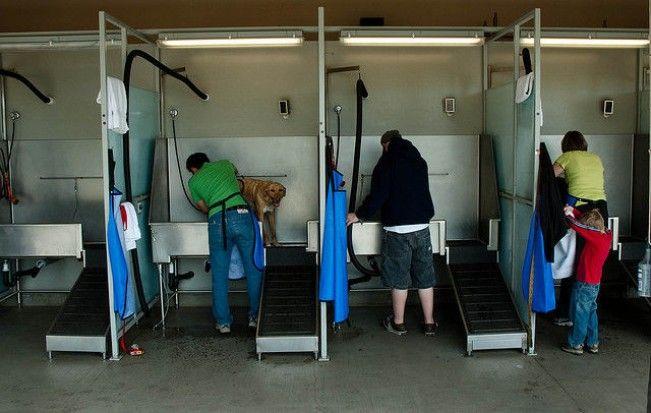Extractor De Baño Hace Mucho Ruido:MI PERRO Y YO: ¿Donde poner guapo a mi perro?