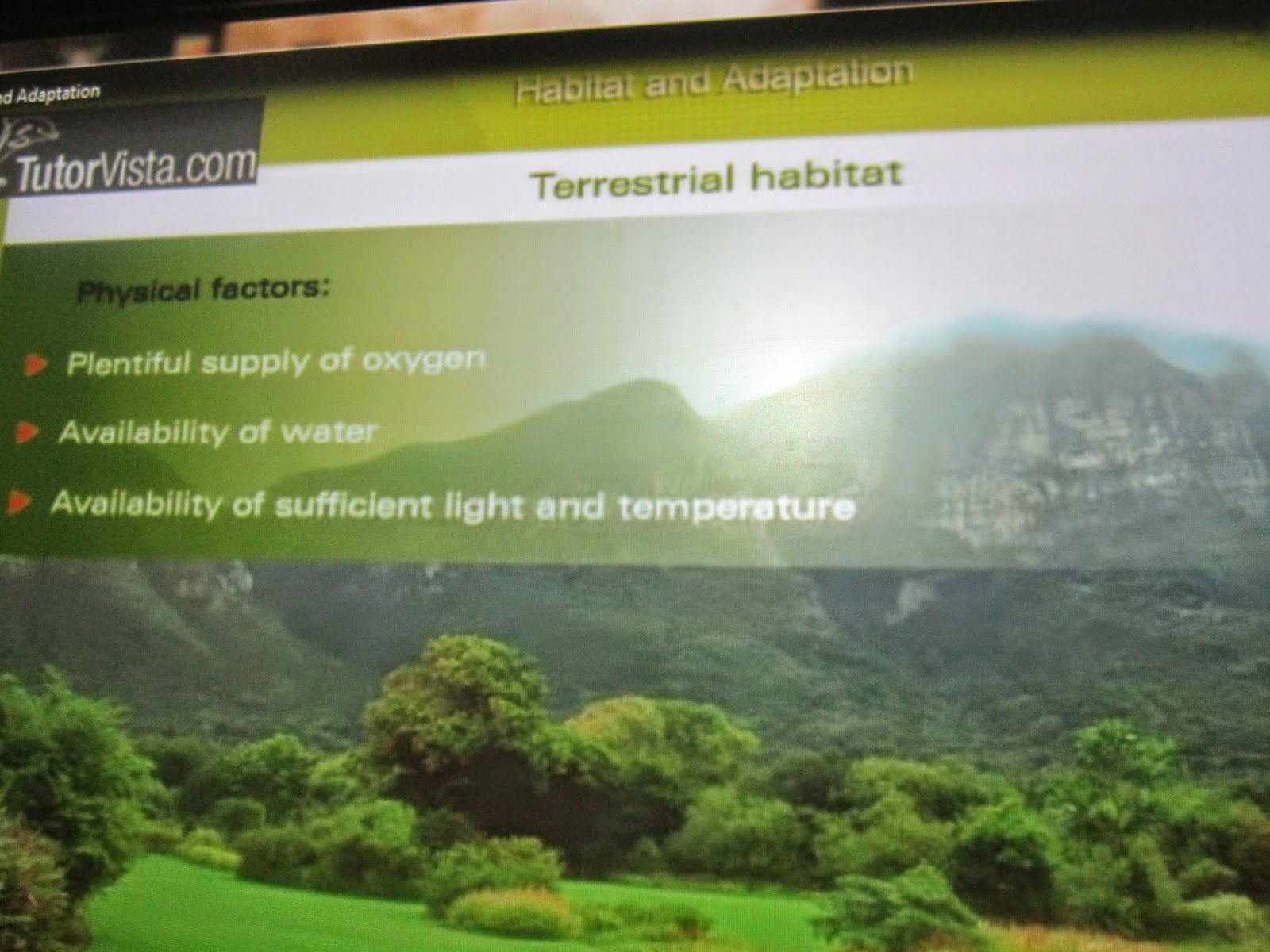 terrestrial habitat on all animals