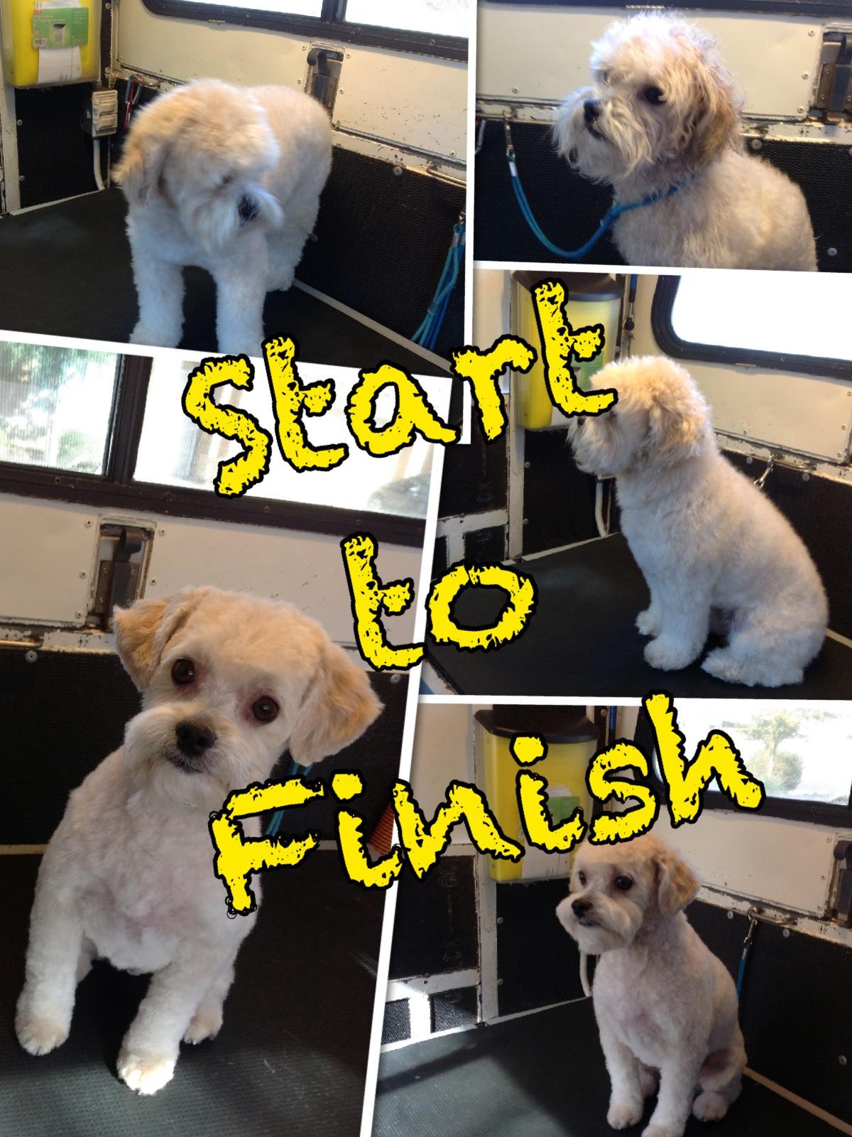 Az pet stylist inc office hours solutioingenieria Choice Image