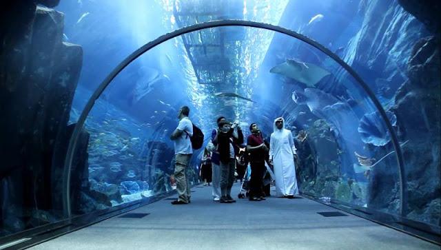 Dubai Mall Akvaryumu