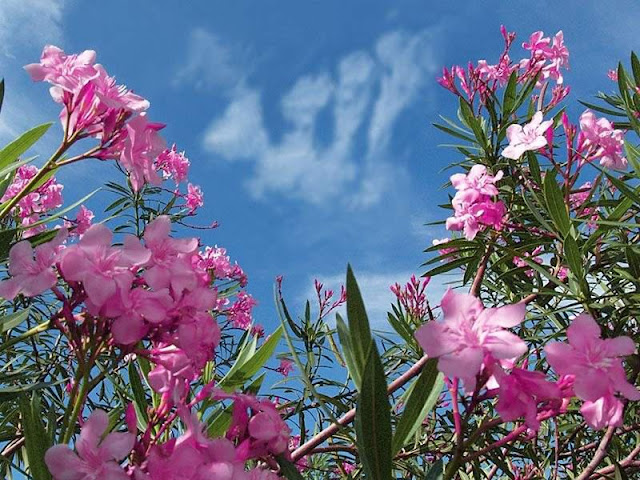 ALLAH Is great Blue sky and purple flowers