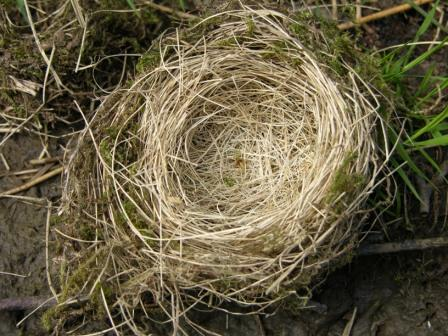 the charmed life bird nests on a nearly worldess wednesday birds nest 448x336