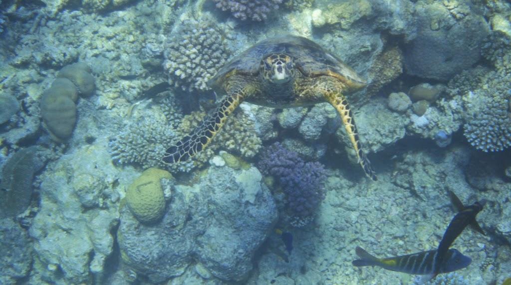 vacanze sul mar rosso: berenice - Soggiorno Mar Rosso 2