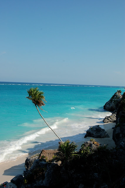 Beautiful Palm Tree Right on the Public Beach Below the Ruins of Tulum