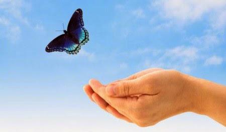 O voo da borboleta