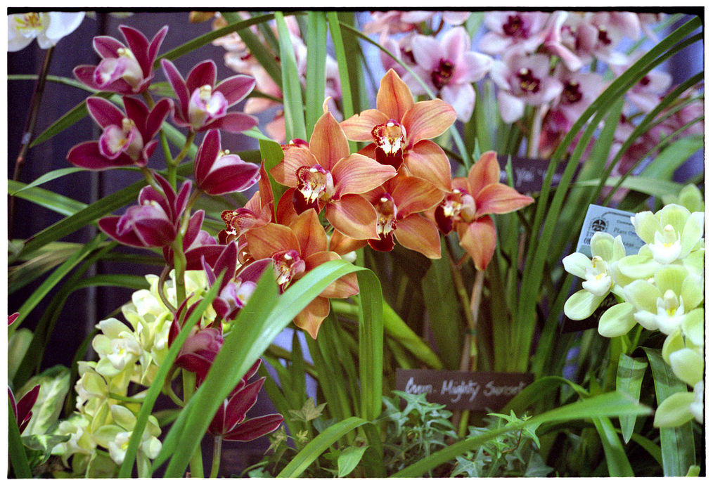 Os an is do umuarama orqu deas - Orquidea cymbidium cuidados ...
