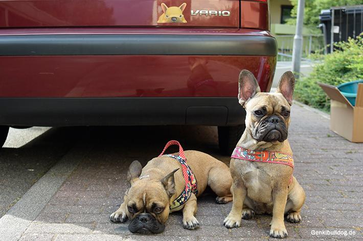 Auto Decal Aufkleber Französische Bulldogge