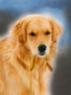 golden retriever mock up for painting