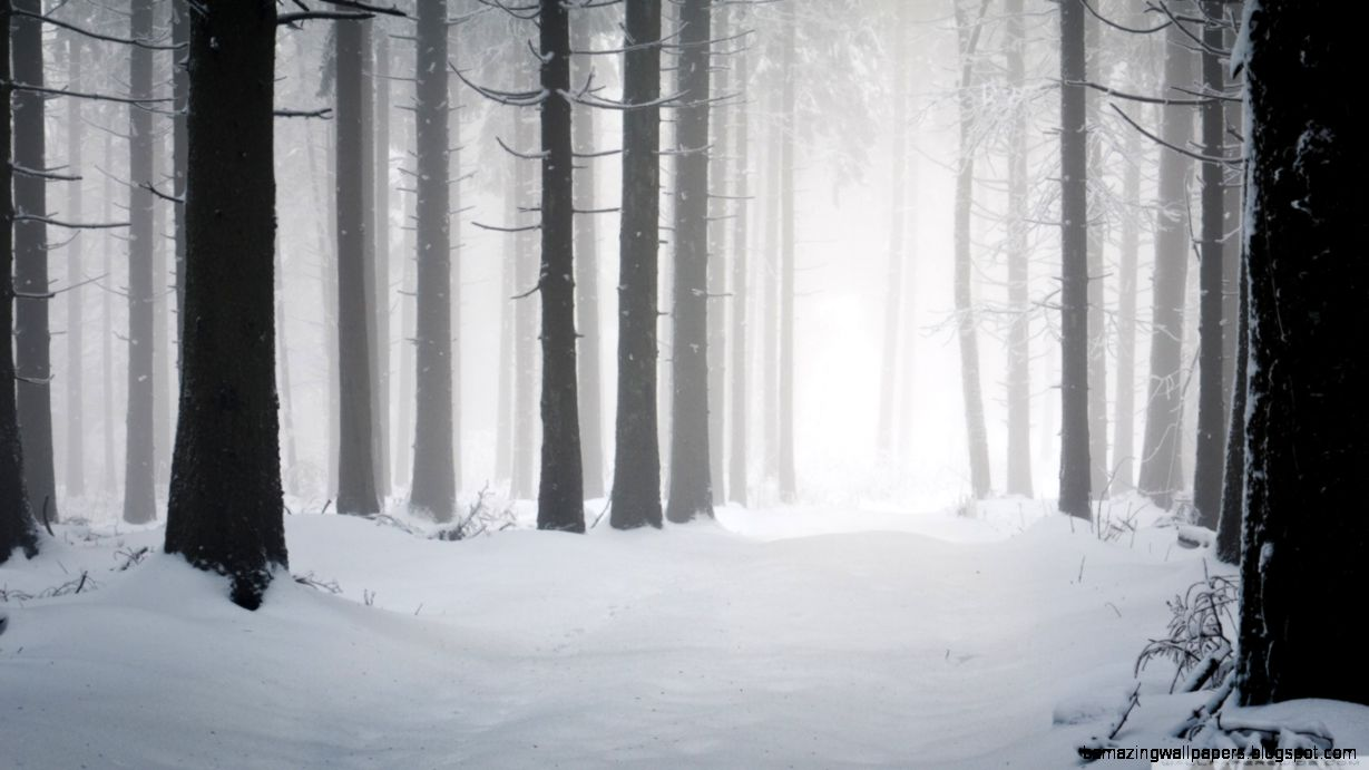 Forest Winter HD desktop wallpaper  High Definition  Fullscreen