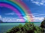 A inteligência da natureza é uma energia que se movimenta e interage o tempo todo.