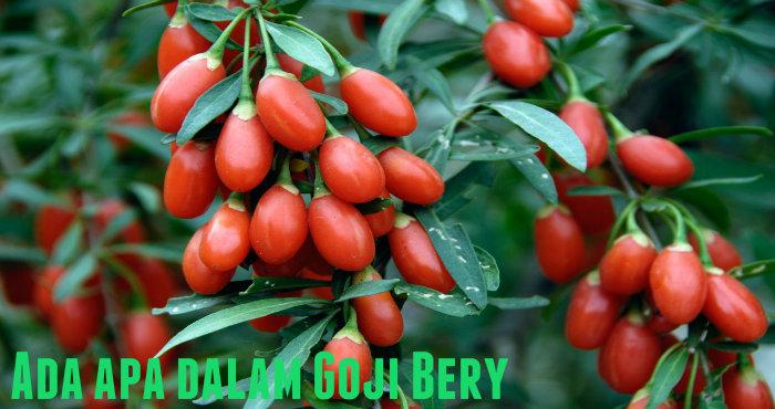 Manfaat Goji Berry dalam Xanmax