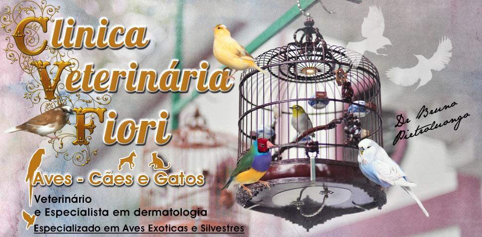 Veterinário de Aves Exóticas e Silvestres.